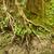 árvore · folhas · horrível · seca - foto stock © pzaxe