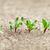 свекла · Сырая · пища · красный · Салат · растительное · свежие - Сток-фото © pzaxe