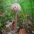 guarda-sol · cogumelo · belo · crescente · grama · verde · comida - foto stock © pzaxe