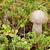 小 · 菌 · 成長 · 緑 · 苔 · 森林 - ストックフォト © pzaxe