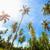 coco · palmas · brillante · sol · playa · cielo - foto stock © pzaxe