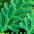 leaves of tropical fern close up stock photo © pzaxe