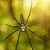 large tropical spider   nephila golden orb stock photo © pzaxe