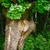 chêne · printemps · couleur · ciel · bleu · ciel · arbre - photo stock © pzaxe