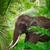 elefánt · állatkert · nyár · nap · természet · háttér - stock fotó © pzaxe