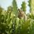 çizgili · sincap · meraklı · sincap · bekleme - stok fotoğraf © pzaxe