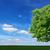 chêne · vert · prairie · ciel · lumière · nuages - photo stock © pzaxe