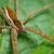 barna · pók · zöld · fal · makró · természet - stock fotó © pzaxe