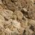Гранит · пород · покрытый · поверхность · черный · цвета - Сток-фото © pzaxe