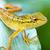 colorido · verde · lagarto · natureza · beleza - foto stock © pzaxe