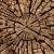 fissuré · arbre · bois · brun · nature · design - photo stock © pzaxe