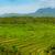 groene · rijst · velden · bali · eiland · voedsel - stockfoto © pzaxe