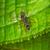 preto · formiga · verde · natureza · jardim - foto stock © pzaxe