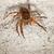 веб · Spider · черный · белый · лапа - Сток-фото © pzaxe