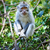 leguaan · vergadering · verticaal · groene · tropische - stockfoto © pzaxe