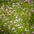 fioritura · trifoglio · campo · vicino · view · nuvoloso - foto d'archivio © pzaxe