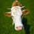 kíváncsi · tehén · ormány · állat · mezőgazdaság · zárt - stock fotó © pzaxe
