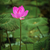 蓮 · 花 · ピンク · 花弁 · 湖 - ストックフォト © pzaxe