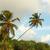 coco · palms · varanda · ver · oceano - foto stock © pzaxe