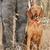 cão · de · caça · floresta · morto · animal · de · estimação · caça - foto stock © quasarphoto