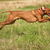 ugrik · vadászkutya · mutat · kutya · kint - stock fotó © Quasarphoto