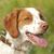 mező · kész · kutya · vadászat - stock fotó © Quasarphoto