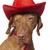 kacsintás · kutya · vicces · állat · áll · koszos - stock fotó © quasarphoto