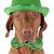 día · perro · verde · sombrero · aislado - foto stock © Quasarphoto