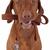 kutya · póráz · száj · aranyos · retkes · terrier - stock fotó © quasarphoto