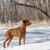 hond · winter · veld · natuur · schoonheid · portret - stockfoto © quasarphoto