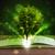 開いた本 · 緑の木 · 日光 · 光 · 木製 - ストックフォト © ra2studio