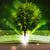 開卷 · 陽光 · 光 · 木 - 商業照片 © ra2studio
