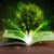 Open · boek · magisch · groene · boom · stralen · licht · houten - stockfoto © ra2studio