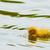 amarelo · patinho · água · fundo · pássaro - foto stock © radub85