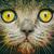 macska · közelkép · portré · szem · haj · háttér - stock fotó © radub85