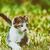 gato · verão · grama · mentiras - foto stock © radub85