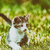 kat · portret · groene · gazon · oog · achtergrond - stockfoto © radub85