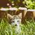 baby cat playing in grass stock photo © radub85