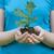 sprout stock photo © raduga21