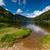 森林 · 公園 · アイルランド · 木材 · 自然 · 木 - ストックフォト © rafalstachura