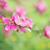 lila · virágok · részlet · szelektív · fókusz · háttér · szépség - stock fotó © rafalstachura