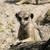 座って · 地上 · 南アフリカ · 草 · 自然 · アフリカ - ストックフォト © rafalstachura