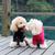 köpek · ayakta · su · çim · saç - stok fotoğraf © raywoo