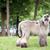 гончая · собака · белый · Постоянный · газона · зеленый - Сток-фото © raywoo