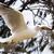 鴎 · 鳥 · 飛行 · ビッグ · 白 · 青空 - ストックフォト © raywoo