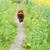 kicsi · uszkár · kutya · fut · gyep · zöld - stock fotó © raywoo