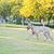 puppy · springen · lopen · jonge · beagle · strand - stockfoto © raywoo