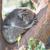 koala · dormir · árbol · vista · retrato - foto stock © raywoo