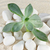 plant on stones and sands stock photo © raywoo