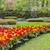 flores · jardim · parque · primavera · fundo - foto stock © RazvanPhotography
